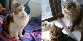 Toffee, Teddy and Bear from Little Cottage Rescue, Luton, homed through Cat Chat
