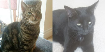Floyd & Roxxie, from Caring Animal Rescue, Stafford, homed through Cat Chat
