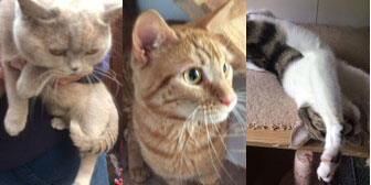 Indie, Monty, Roxy, Sox, Mushroom, Toby, Thelma, Louise, Ziggy, Poppy, Chico, from Burton Joyce Cat Welfare, Nottingham, homed through Cat Chat