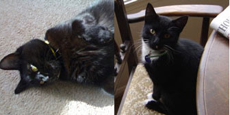 Millie & Frodo, from The Ashmore Rescue for Cats, Wolverhampton, homed through Cat Chat