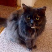 Sasha, from Cats Protection, Glasgow, homed through Cat Chat