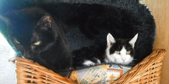 Spot & Mitzi, from Little Cottage Rescue, Luton, homed through Cat Chat