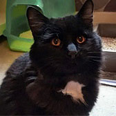 Fluffy, from The Catcuddles Sanctuary, Enfield, homed through Cat Chat