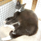Misty from Beverley & Pocklington Cats Protection, homed through Cat Chat