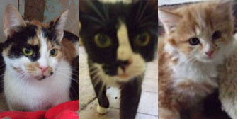 Rosie, Sadie & Tina, from Ryedale & Scarborough Cat Welfare, Scarborough, homed through Cat Chat