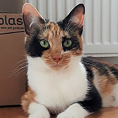Star, from Cats Protection Trafford, homed through Cat Chat