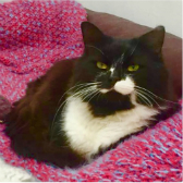 Tramp from Babs Cats, Swanley, homed through Cat Chat