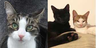 Lily, Freddie & Reggie, from BabsCats, Swanley, homed through Cat Chat