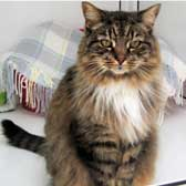 Tia, from Thanet Cat Club, Broadstairs, homed through Cat Chat
