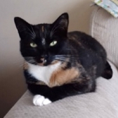 Abby from Nuneaton and Hinckley Cats in Need, homed through Cat Chat
