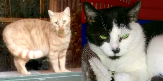 Goldie & Betty from Burton Joyce Cat Welfare, Nottingham, homed through Cat Chat
