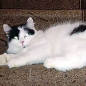 Helga, from Margs Moggies, Bradford on Avon, Wiltshire, homed through Cat Chat