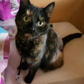Marbles from Royston Animal Welfare, Barnsley, homed through Cat Chat