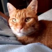 Sid from Cat Action Trust, Leeds, homed through Cat Chat