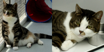 Tiggy & Ozzy from Thanet Cat Club, homed through Cat Chat