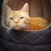 Tyke, from Kathy's Cat Rescue, The Wirral, homed through Cat Chat