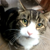Walter from Kirkby Cats Home, Nottingham, homed through Cat Chat