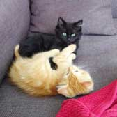 Aric & Archie, from Eight Lives Cat Rescue, Sheffield, homed through Cat Chat