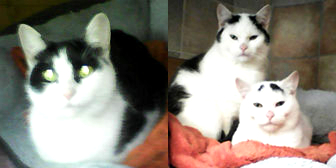 Jasmine, Barney & Leo from Kathy's Cat Rescue, Merseyside, homed through Cat Chat