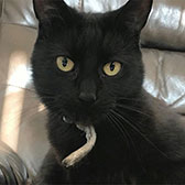 Willow, from Caring Animal Rescue, Stafford, homed through Cat Chat