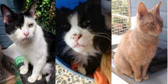 Bonnie, Tommy & Ginge, from Maesteg Animal Welfare  Society, Bridgend, homed through Cat Chat