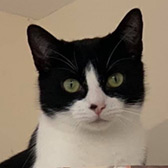 Matilda from Cool Cats at Mitzi's Kitty Corner, Totnes, homed through Cat Chat
