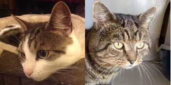 Barney & Morris, from A5 Grendon Cat Shelter, Atherstone, homed through Cat Chat