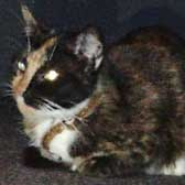 Rolo, from Lancashire Paws Cat Rescue, Bolton, homed through Cat Chat