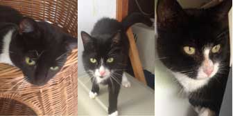 Ricky, Felix & Charley, from A5 Grendon Cat Shelter, Atherstone, homed through Cat Chat