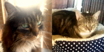 Mary & Tibs, from Cat Welfare Wisbech, homed through Cat Chat