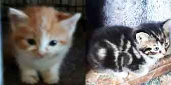 Mickey, Monty & three tabby kittens, from Ryedale and Scarborough Cats Welfare, Scarborough, homed through Cat Chat