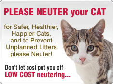 please neuter your cat