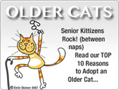 Top 10 Reasons to Adopt an Older Cat