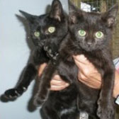kittens homed through cat chat from Ipswich Animal Welfare Centre