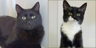 pair of cats homed from national animal welfare trust clacton