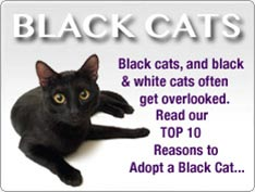 Top 10 Reasons to Adopt a Black Cat
