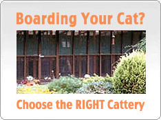 Choosing the right boarding cattery for your cat
