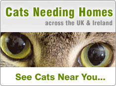 Cat Rescue Centres UK - Pedigree Cats - Adopt a Cat - Cat Chat