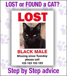 lost and found cat advice