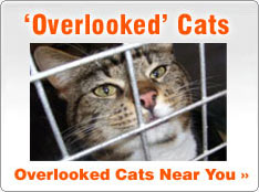 Overlooked Rescue Cats for Adoption