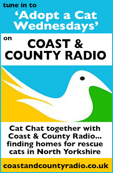 Coast and County Radio, Adopt a Cat Wedenesdays