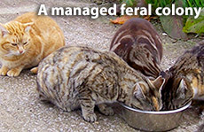 Managed Feral Cat Colony