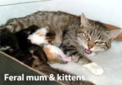 Feral mum cat with kittens