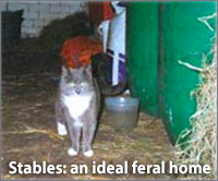 farms and stables, ideal home for feral cats