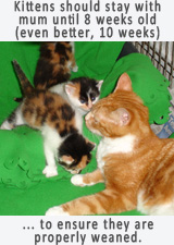 Kittens should remain with Mum at least 8 weeks