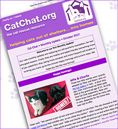 october 2017 cat chat news