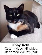 Abby from Cats in Need (Hinckley) - Homed