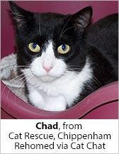 Chad from Cat Rescue (Chippenham) - Homed
