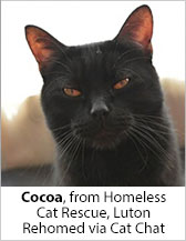 Cocoa from Homeless Cat Rescue (Luton) - Homed