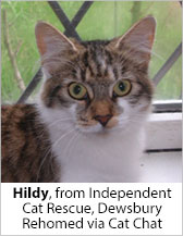 Hildy from Independent Cat Rescue (Dewsbury) - Homed